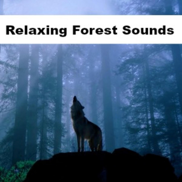 Owl Sounds in a Rainy Forest, a song by The Relaxation