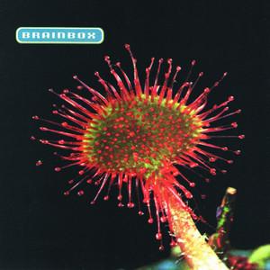 Primordia album