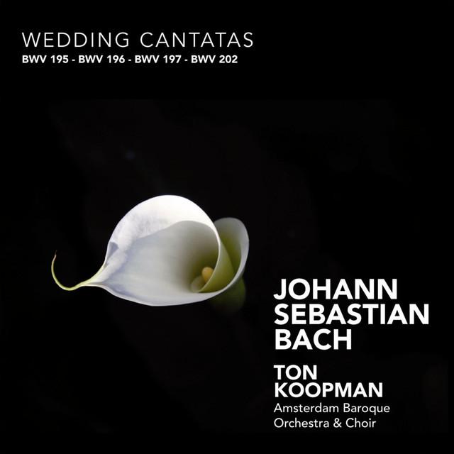 Bach: Wedding Cantatas