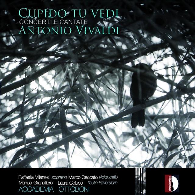 Antonio Vivaldi: Cupido tu vedi Albumcover