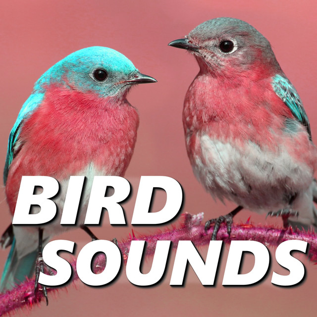 Stress-Free Bird Recordings, a song by Animal and Bird Songs on Spotify