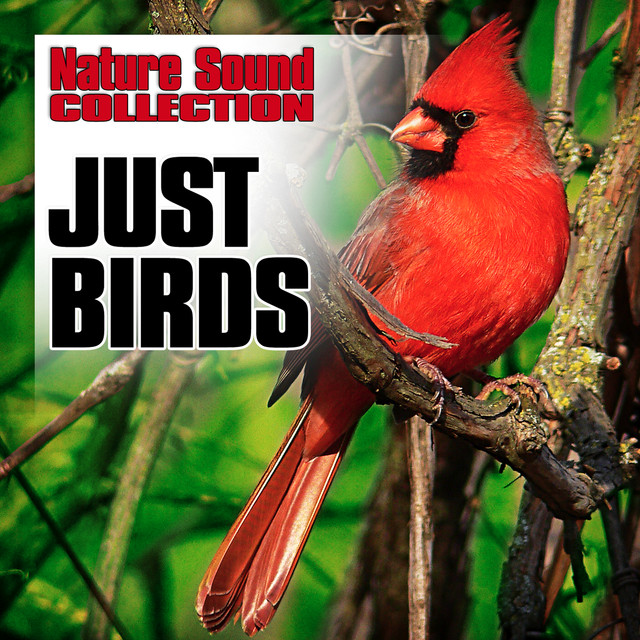 Just Birds (Nature Sounds) by Nature Sound Collection on Spotify