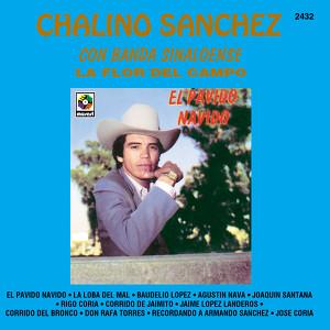 El Pavido Navido Albumcover
