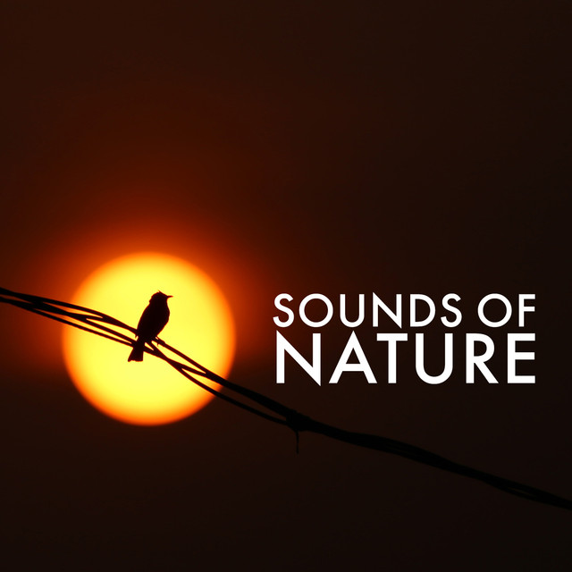 Sounds of Nature Albumcover