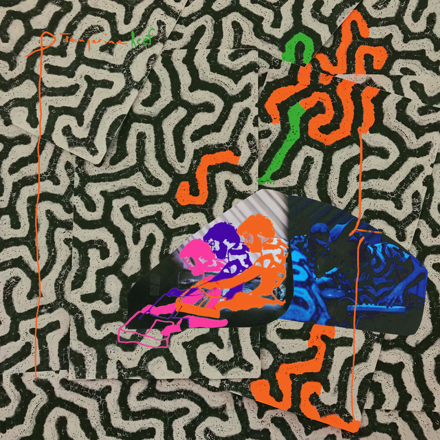 Album cover for Tangerine Reef by Animal Collective