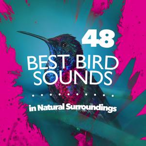 48 Best Bird Sounds in Natural Surroundings Albümü
